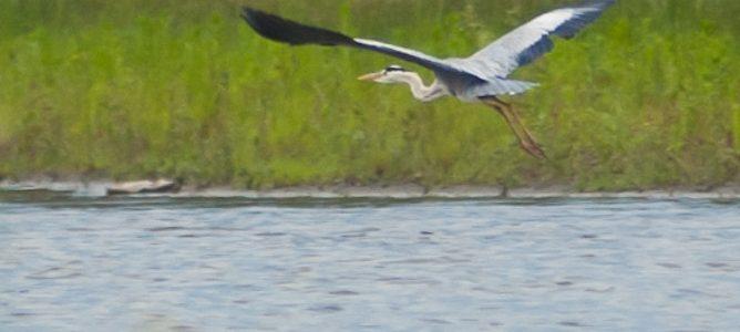 Животные и птицы на реке